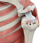 Rotator Cuff Repair and Reconstruction